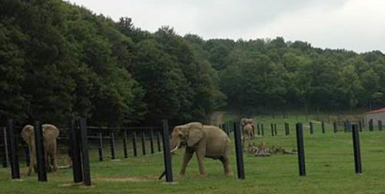 Elephants - International Animal Exchange | Safe Worldwide Animal Transportation
