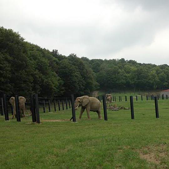 elephants-pittsburgh-6