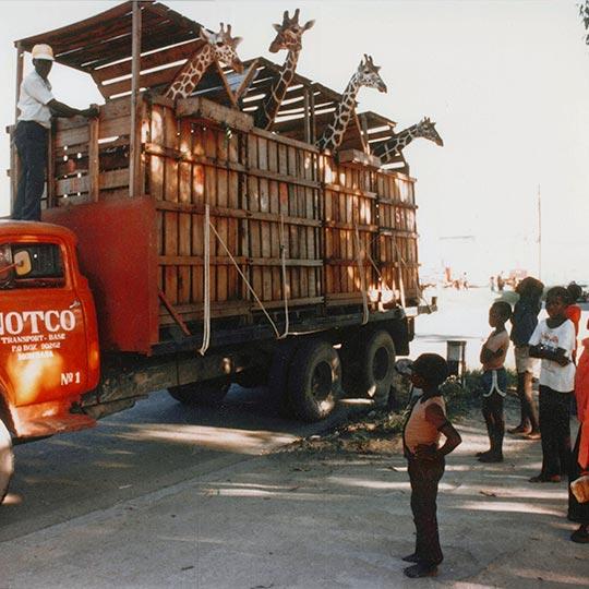 Giraffe Transportation